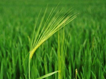 Κοινή Αγροτική Πολιτική: Τα υπέρ