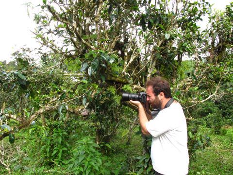 Dendrobium1