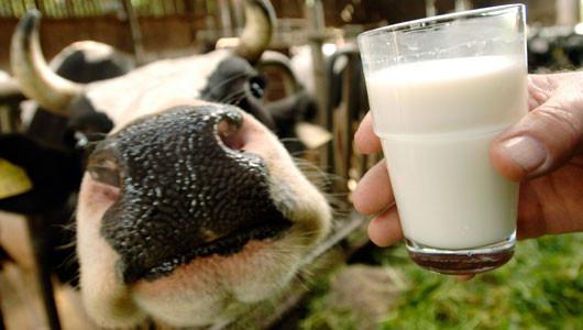 Το γάλα και το δάσος