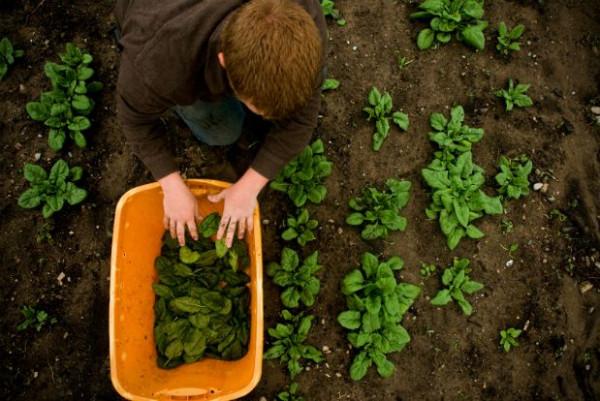Από άνεργος… αγρότης