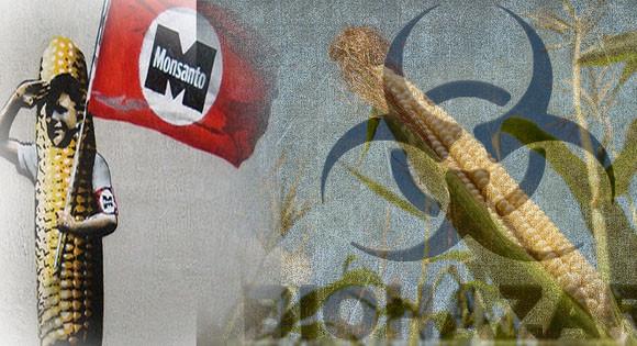 Η ΕΕ δεν έχει γνώμη για τη Monsanto