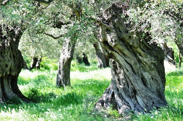 Photo: calypsotree.com